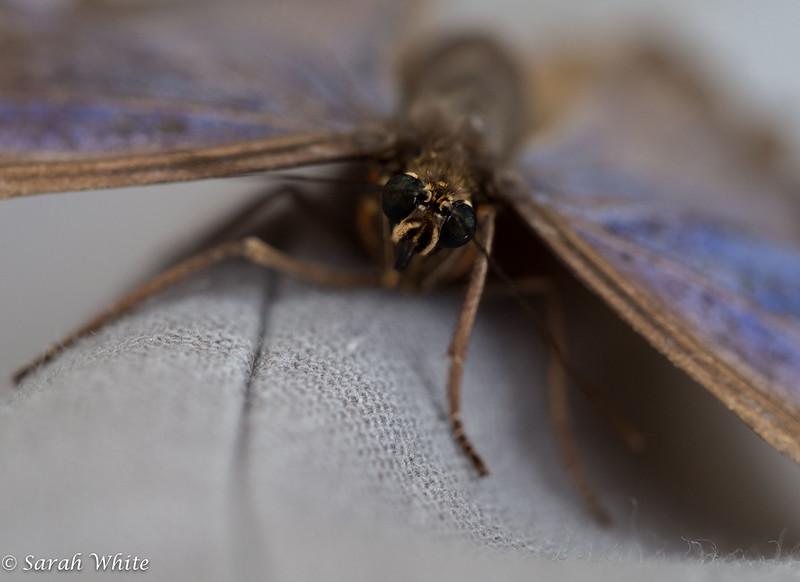 140503_ButterflyHouse_394.jpg