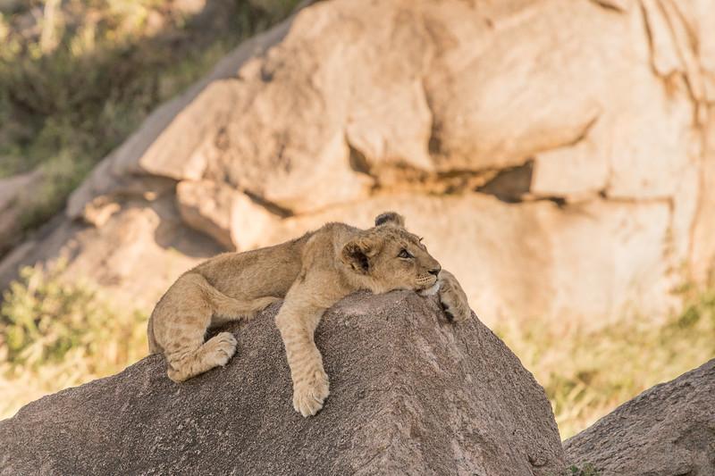Tanzania_Feb_2018-589.jpg