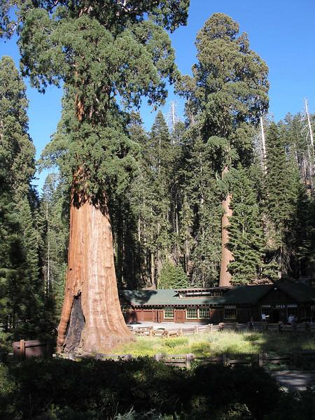 Visitor Center - Sequoia NP