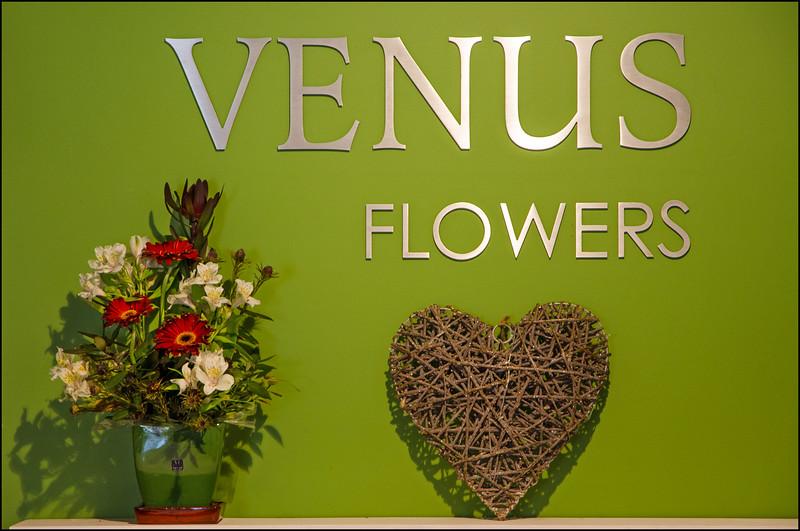Venus Flowers