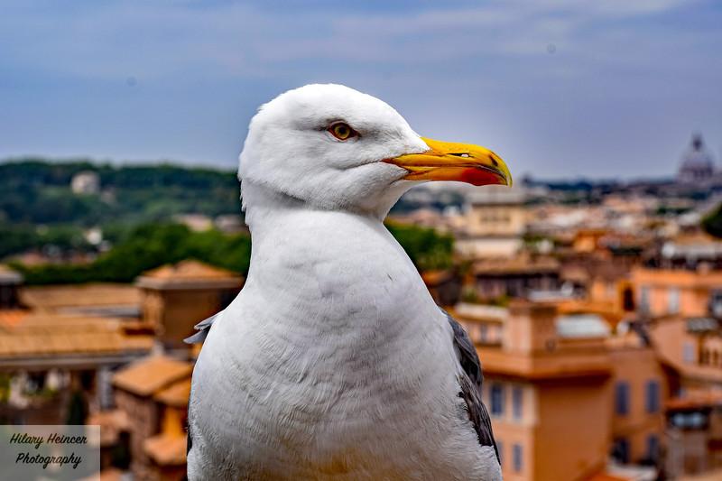 Roman Bird