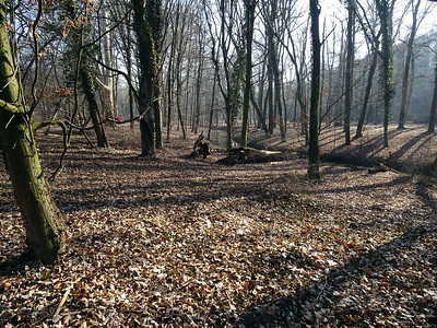 2019.02.17. Alcsút Arborétum