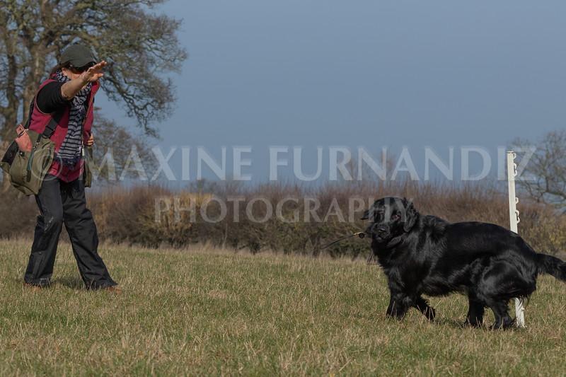 Dog Training Novice GD Feb2019-5777.jpg