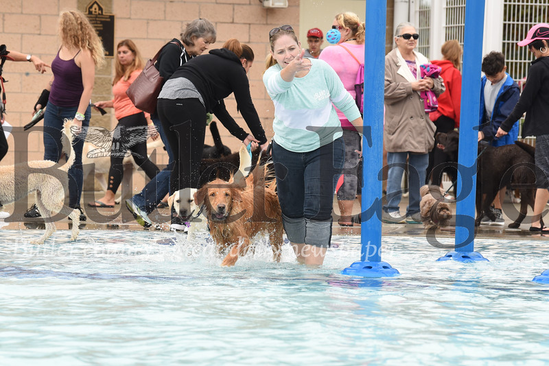 Dogs across Butler County enjoyed a day at the pool this weekend with dog swims at Cranberry Township Community Water Park Saturday and Alemeda Park Pool in Butler Sunday. (Pictured: Cranberry pool at North Boundary Park.) Seb Foltz/Butler Eagle