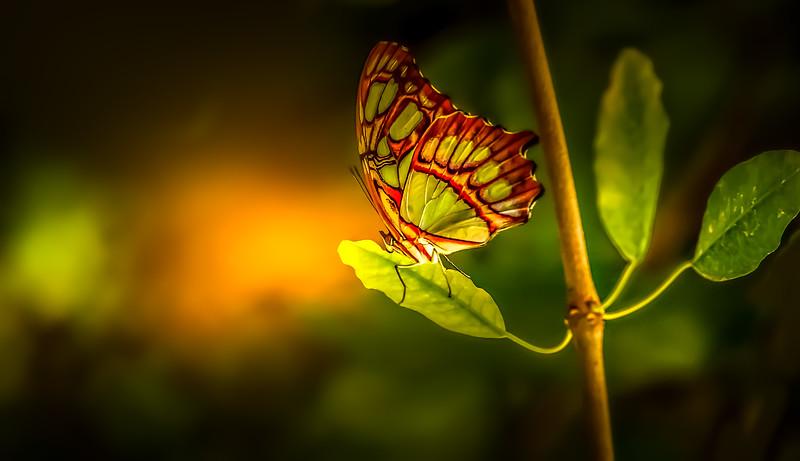 Butterfly-036.jpg