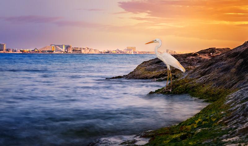 White Egret in sunset