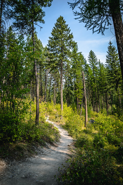 Trail Through the Forest Near Whitefish Montana