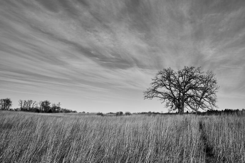 Sands Prairie Epiphany 13.jpg