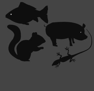 ANIMALS: MISC
