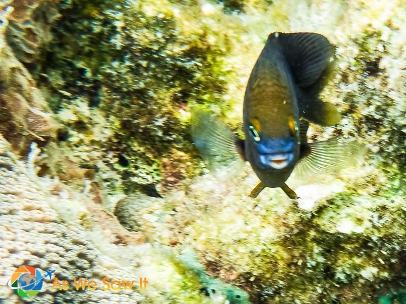 Under-Bocas-Del-Toro-1010263.jpg
