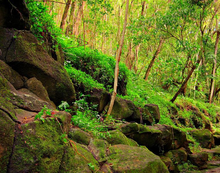 Kauai'10_S90_HDR5TC_21.jpg