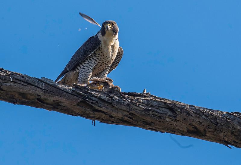 HNBH Birds1-43.jpg