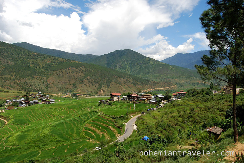 rice paddies around Divine Madman temple Bhutan (3).jpg