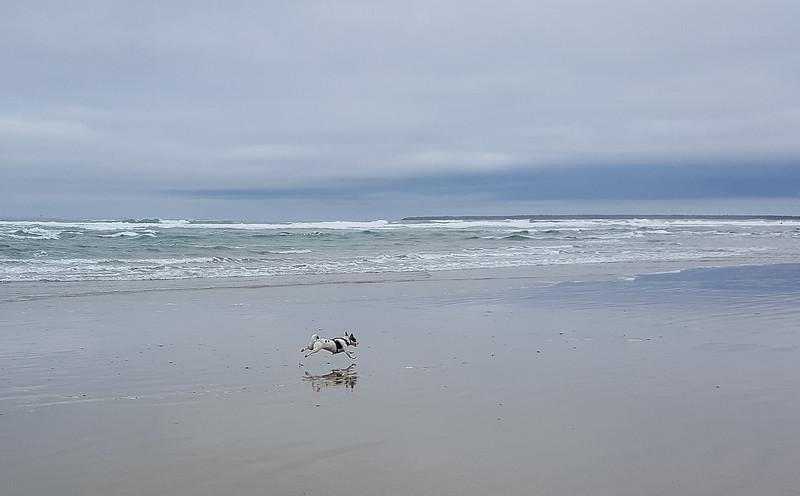 Beach walk with Mattie (9 of 20).jpg