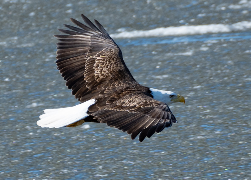 03-12-2021-eagles-14.jpg