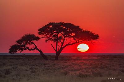 Etosha scenics