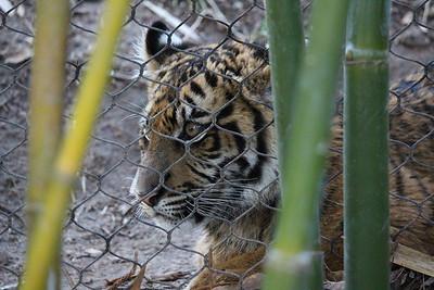SD Wild Animal Park 2016-03-16