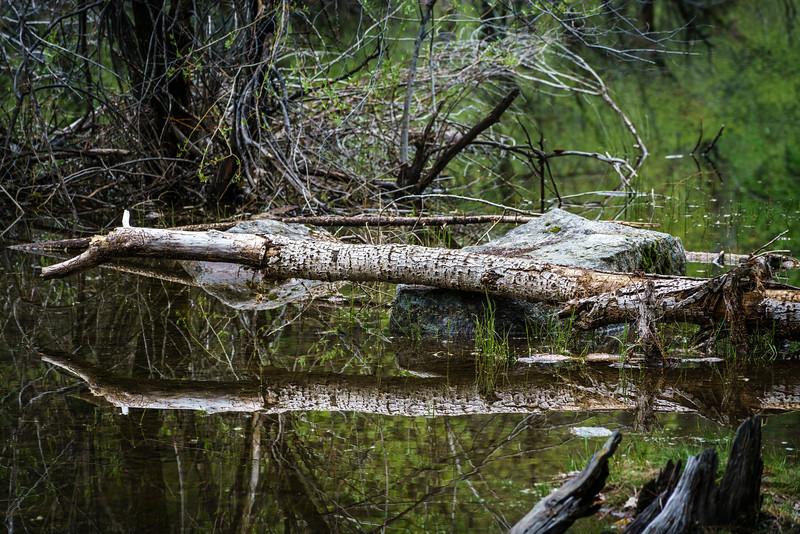Fallen Log - Mirror Lake.jpg
