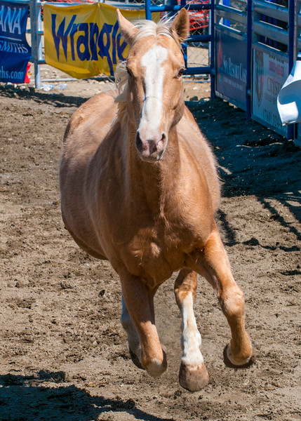 PS_Horses-3.jpg