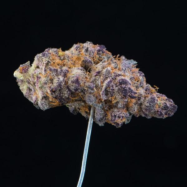 Tropicana Cookie  4.jpg