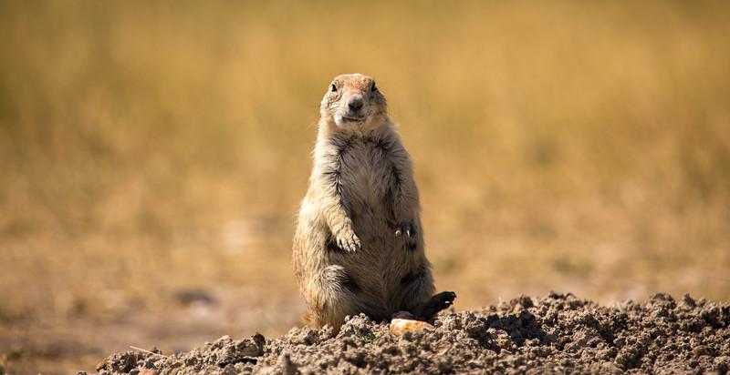 Prairie Bro