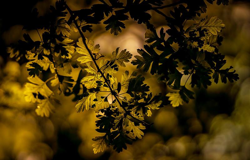 The Magic of Light-429.jpg