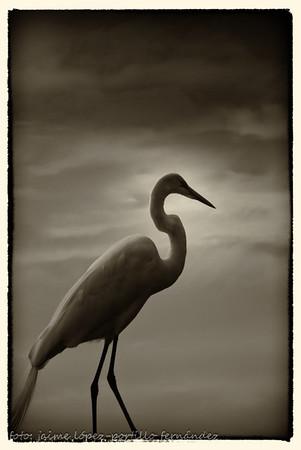 Aves I - Birds I