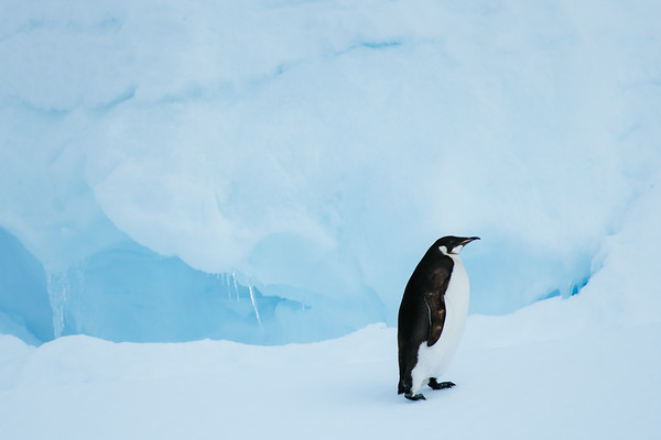 National Geographic Expeditions -Antarctica