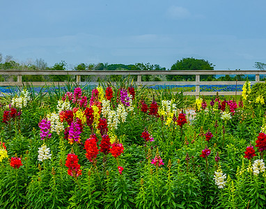Bluebonnets and Indian Paintbrushes