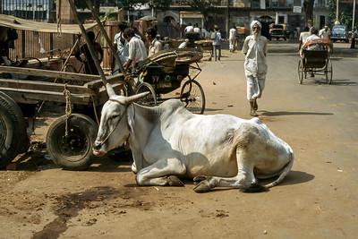 Delhi 1978