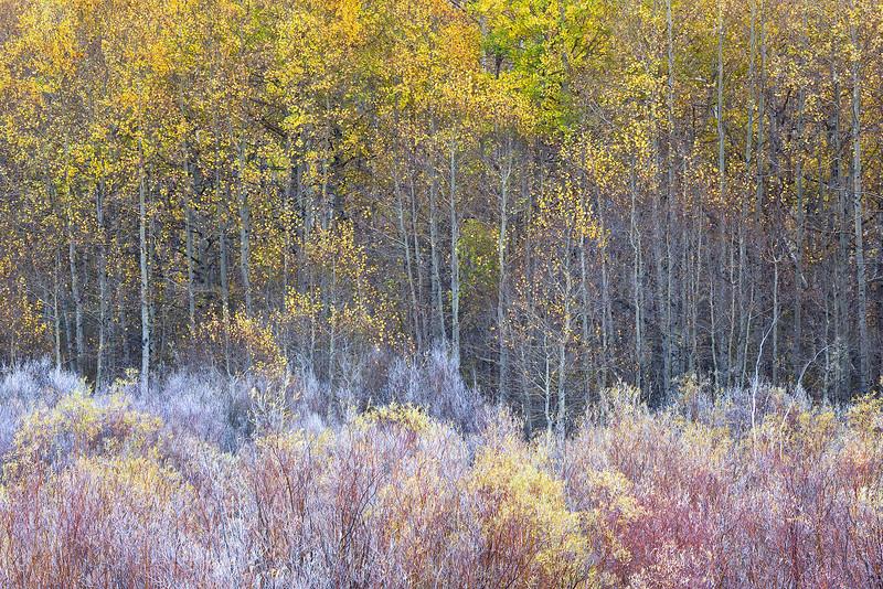 Autumn Layers
