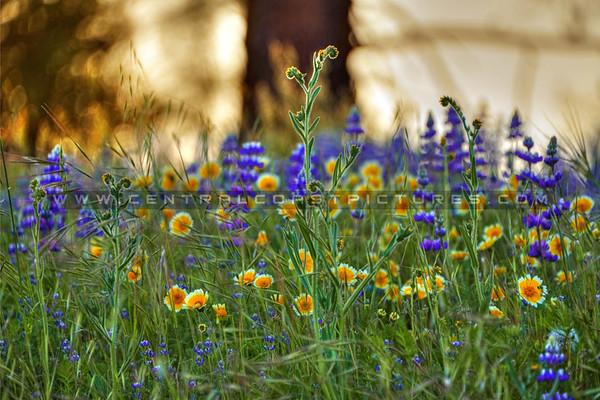 Wildflowers, Hwy 58