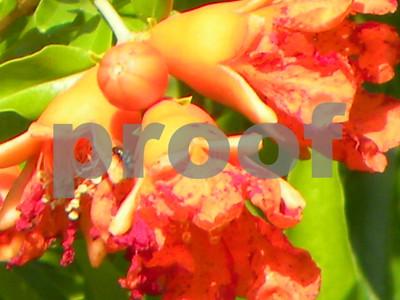 pomegranates-bring-delicious-beauty