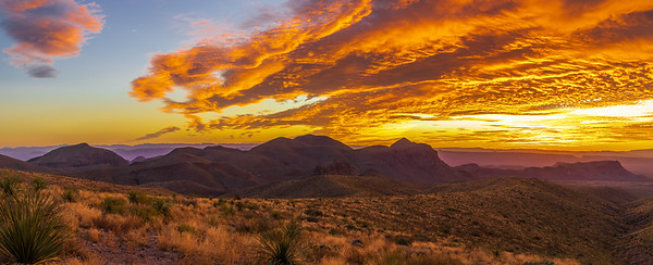 Limited Edition - Big Bend National Park