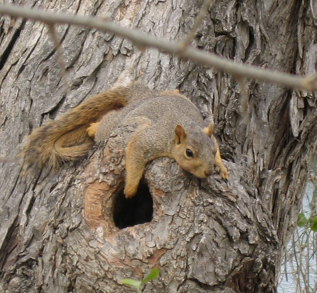 tired-squirrel_3348268028_o.jpg