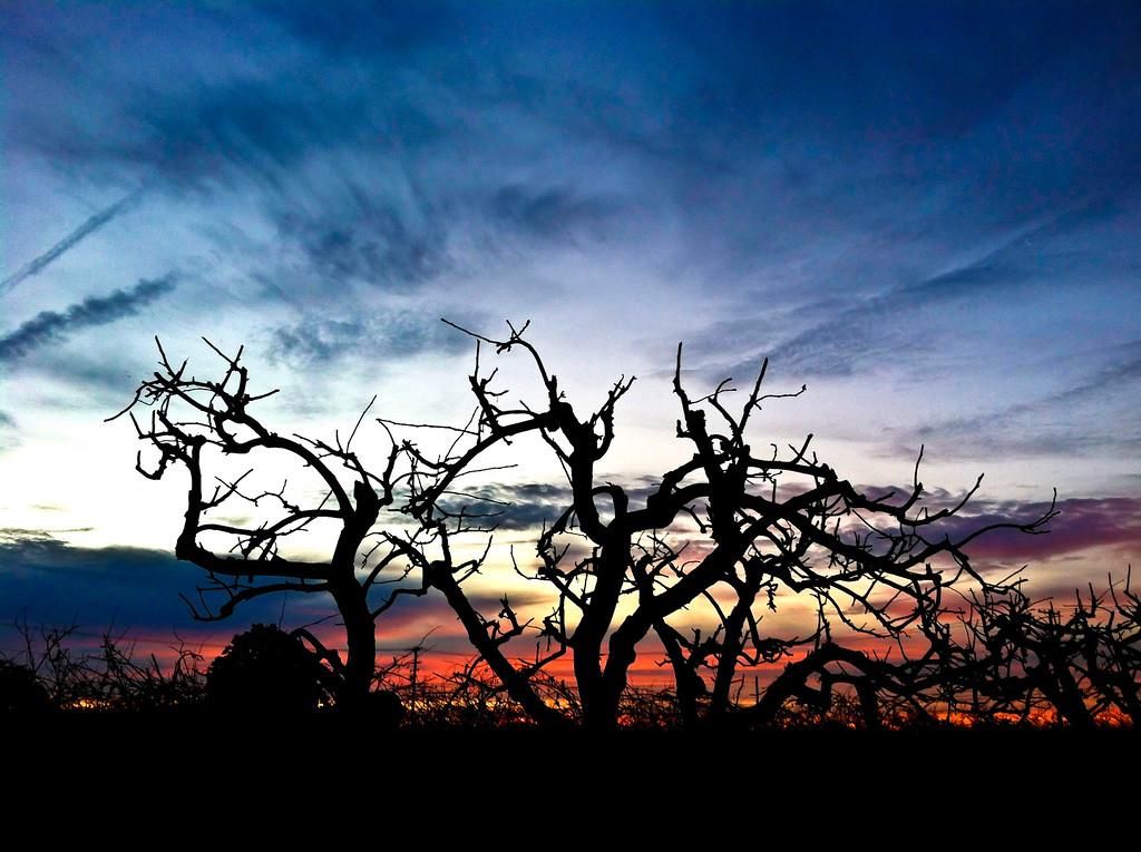 1/20/12<br /> <br /> Sunrise over Lodi, CA