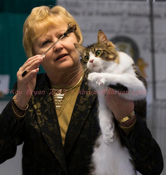 CatShow2014101.JPG