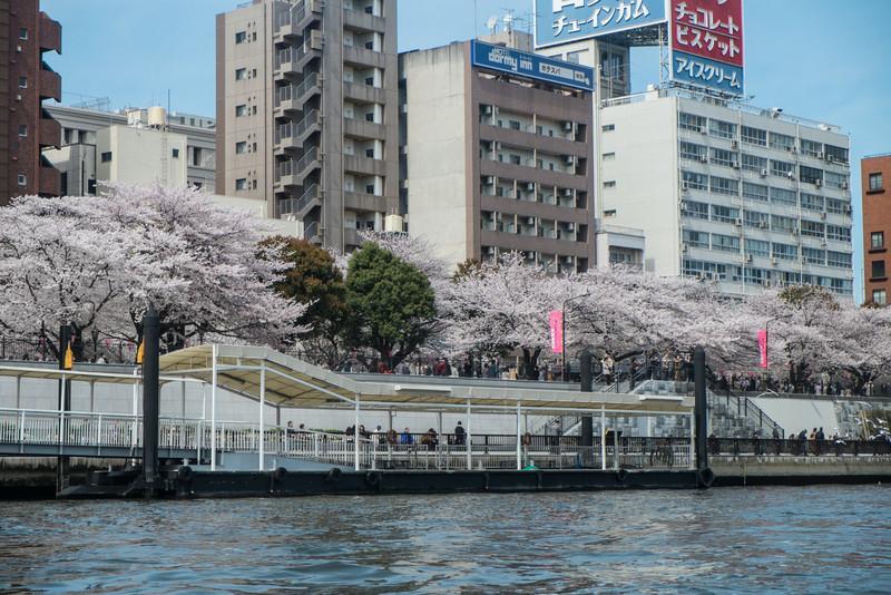 Tokyo Day 3 (162 of 271).jpg