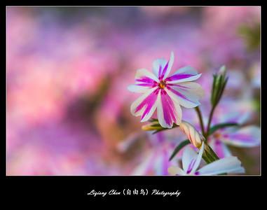 Unknown flower-27
