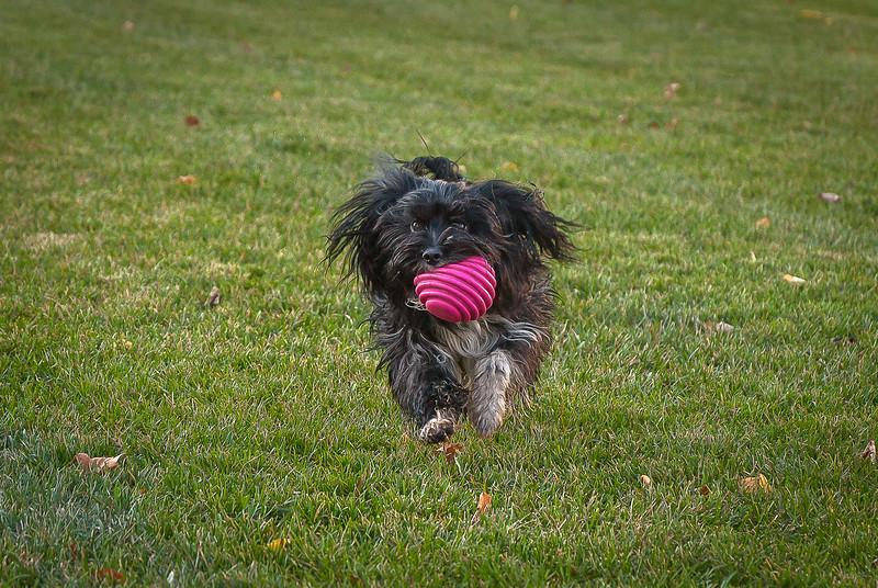 dog run18.jpg