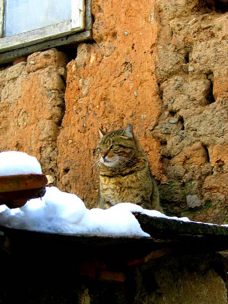 Prizren Kitty.jpg