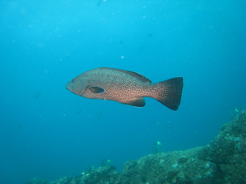 Diving in the Galapagos (150 of 392)