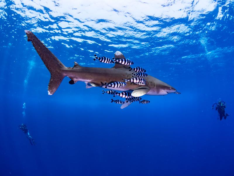 SharkQuest_29Jun18_0407.jpg