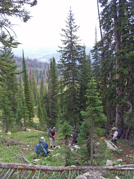 The group amongst the subalpine firs enroute to Wolverine Peak via a game trail