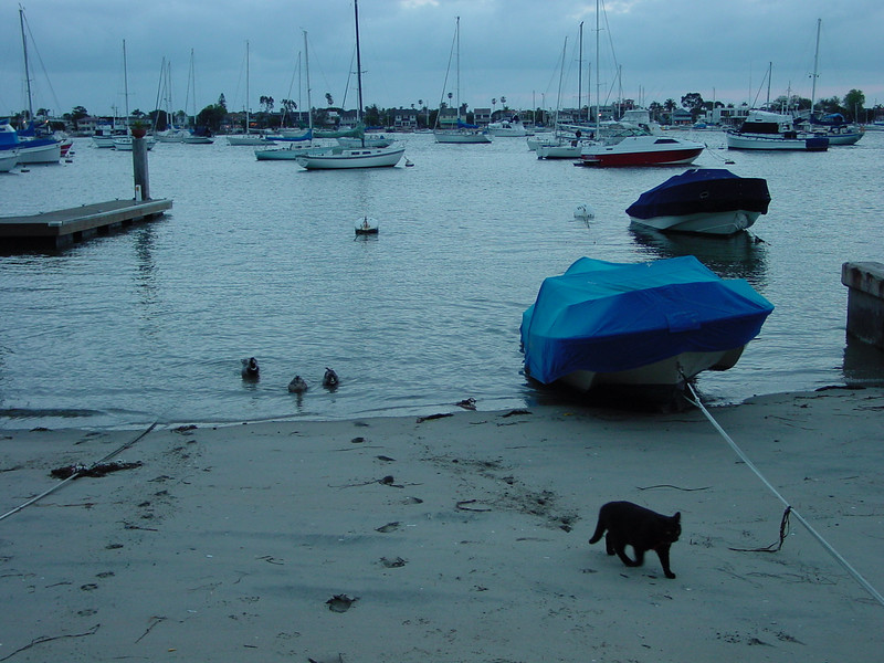 Beach at dusk with cat.jpg