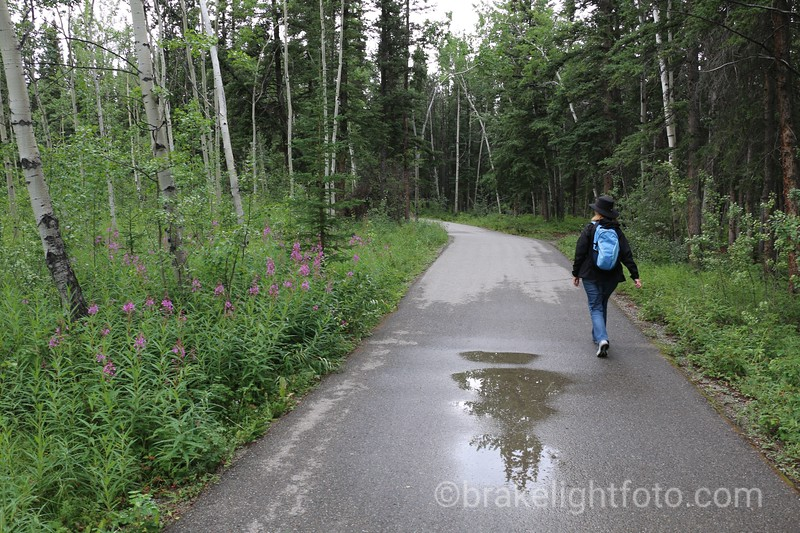 The Millennium Trail