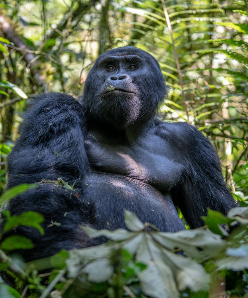 Uganda_T_Gor-488.jpg