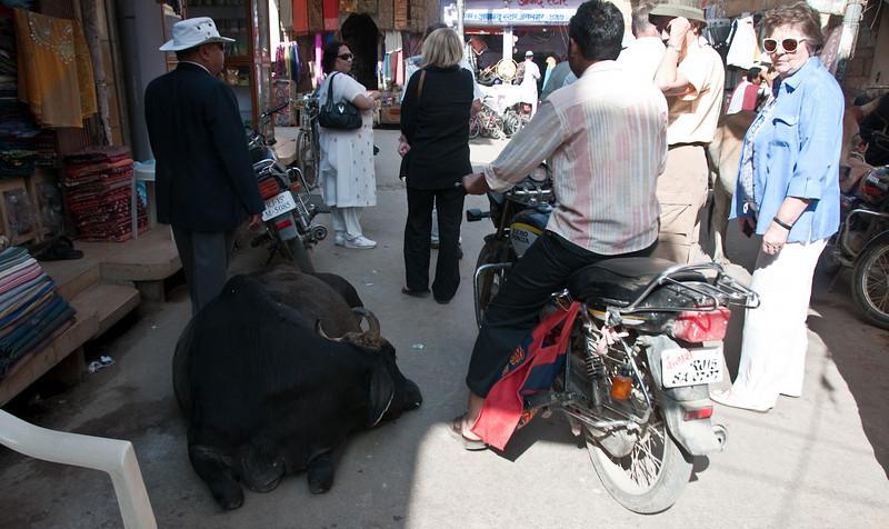POW Day 5-_DSC3480- Jaisalmer.jpg