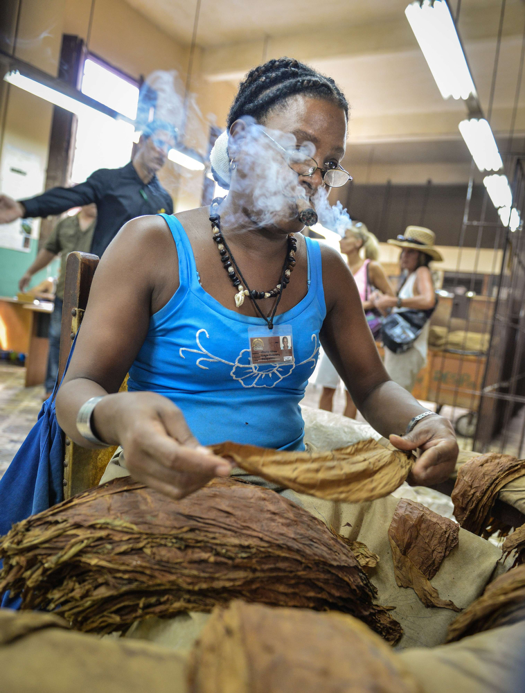 . A worker smokes a cigar as he prepares tobacco leaves, on February 27, 2014 at the H. Upmann cigar factory in Havana. The production of Cuban cigars experienced an 8% growth in 2013 adding 447 million dollars to the Cuban economy. The XVI Havana Cigar Festival is running in Cuba with the presentation of the best Cuban cigars. (ALBERTO ROQUE/AFP/Getty Images)