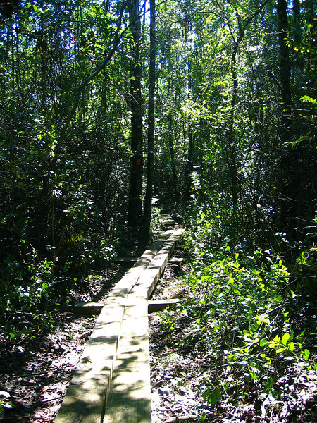 Fort Braden Trail, Lake Talquin State Forest